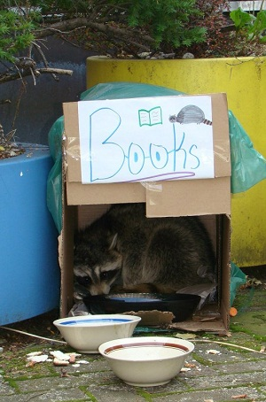 Mr. Rocky Books racoon in his cardboard house