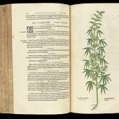 Cannabis Literacy | BackTalk