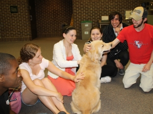 Uconn Therapy dog
